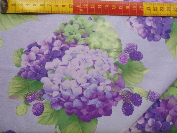 Hydrangeas flieder/grün